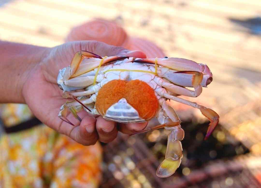 Crab seafood in Kep